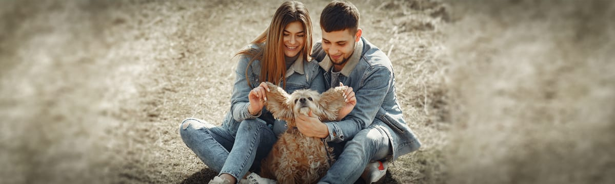 """II edycja akcji """"Pomagam Włochaczom"""" – Wspieraj schronisko dla psów i kotów!"""